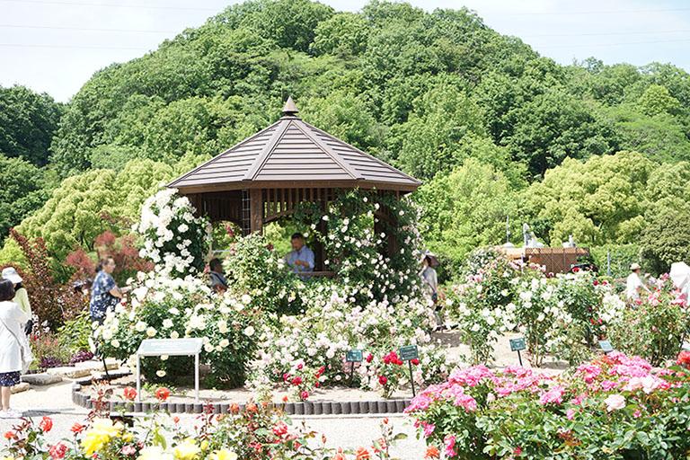 記念 花 公園 フェスタ