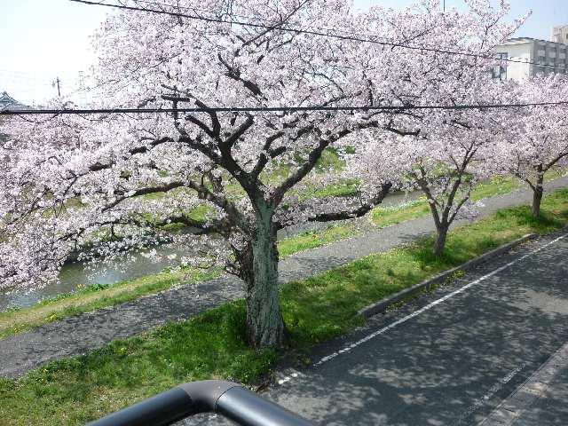 メゾン・ド・ラ・ヴィ佐奈川 桜